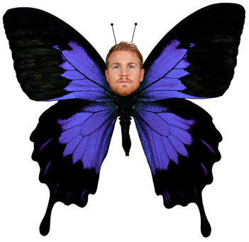 PlayoffButterfly.png
